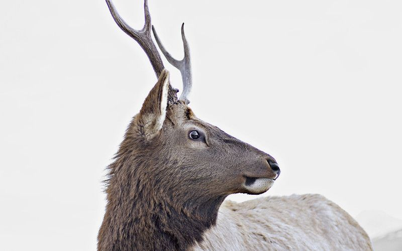 Setup ELK for NGINX logs with Elasticsearch, Logstash, and Kibana