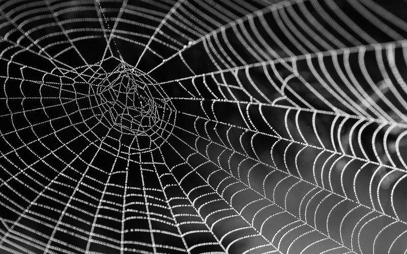 Spider web represents blog SEO optimization techniques